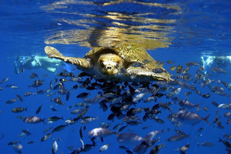 turtle Costa Rica