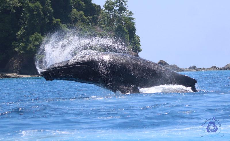 whale breach sanctuary