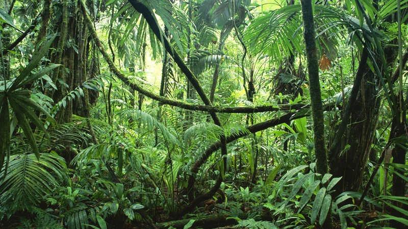 Corcovado National Park costa rica Easy Resize com