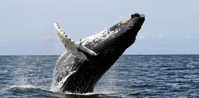 Parque marino ballena Easy Resize com